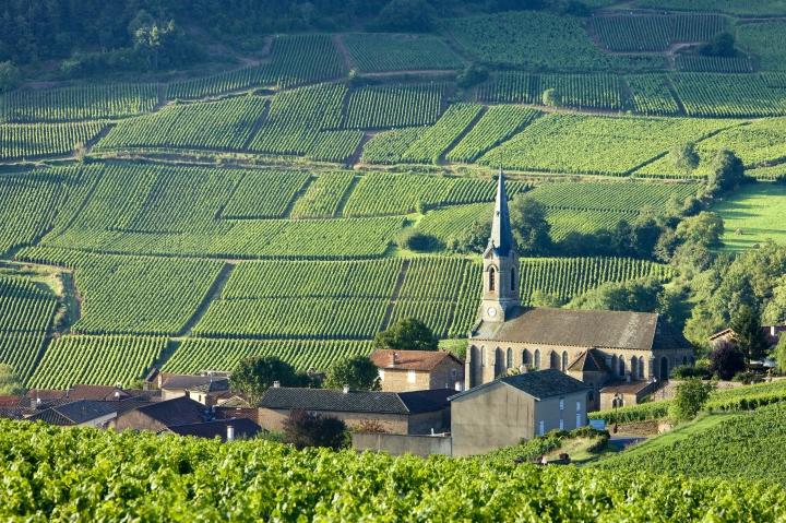 Vergisson with vineyards Burgundy France